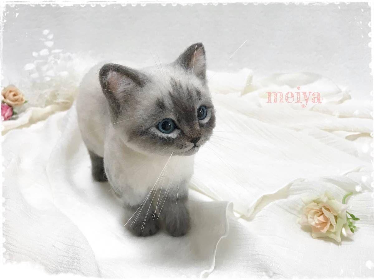 シャムミックスのかわいい子猫数ある作品の中からお目にとめて