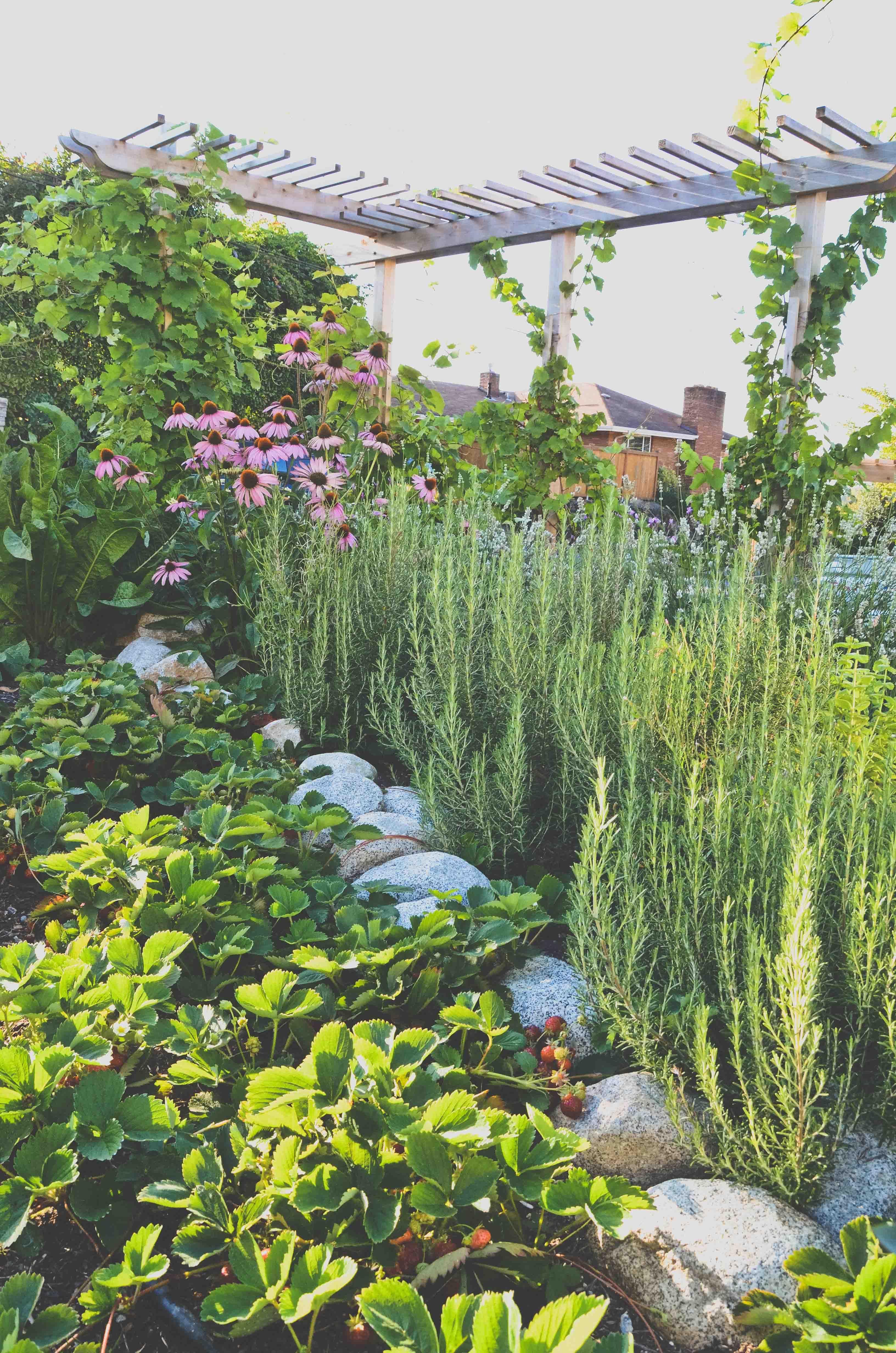 Fall info: Planting Garlic, Mustard Greens, and More...