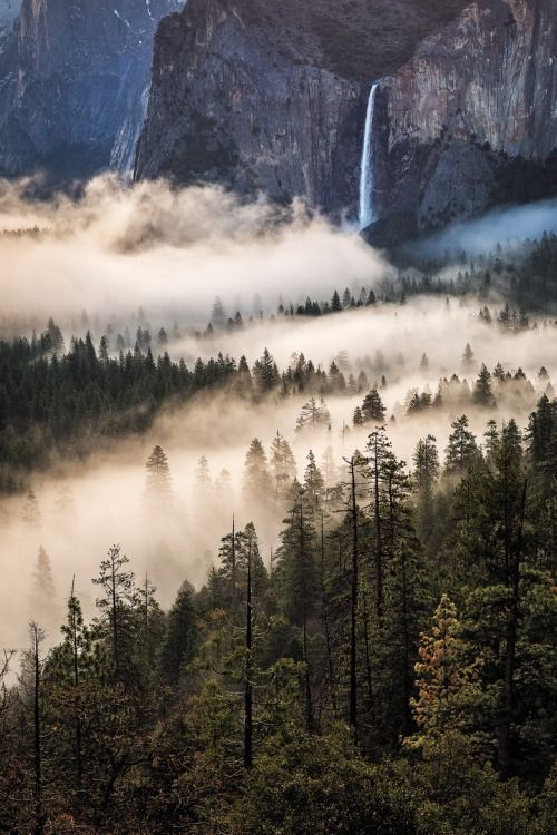 expressions-of-nature: Misty Veil / Yosemite by: Jared Warren