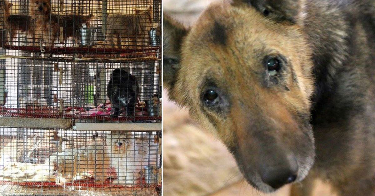 140 Animals Pulled From Filthy Cages In Texas Puppy Mill