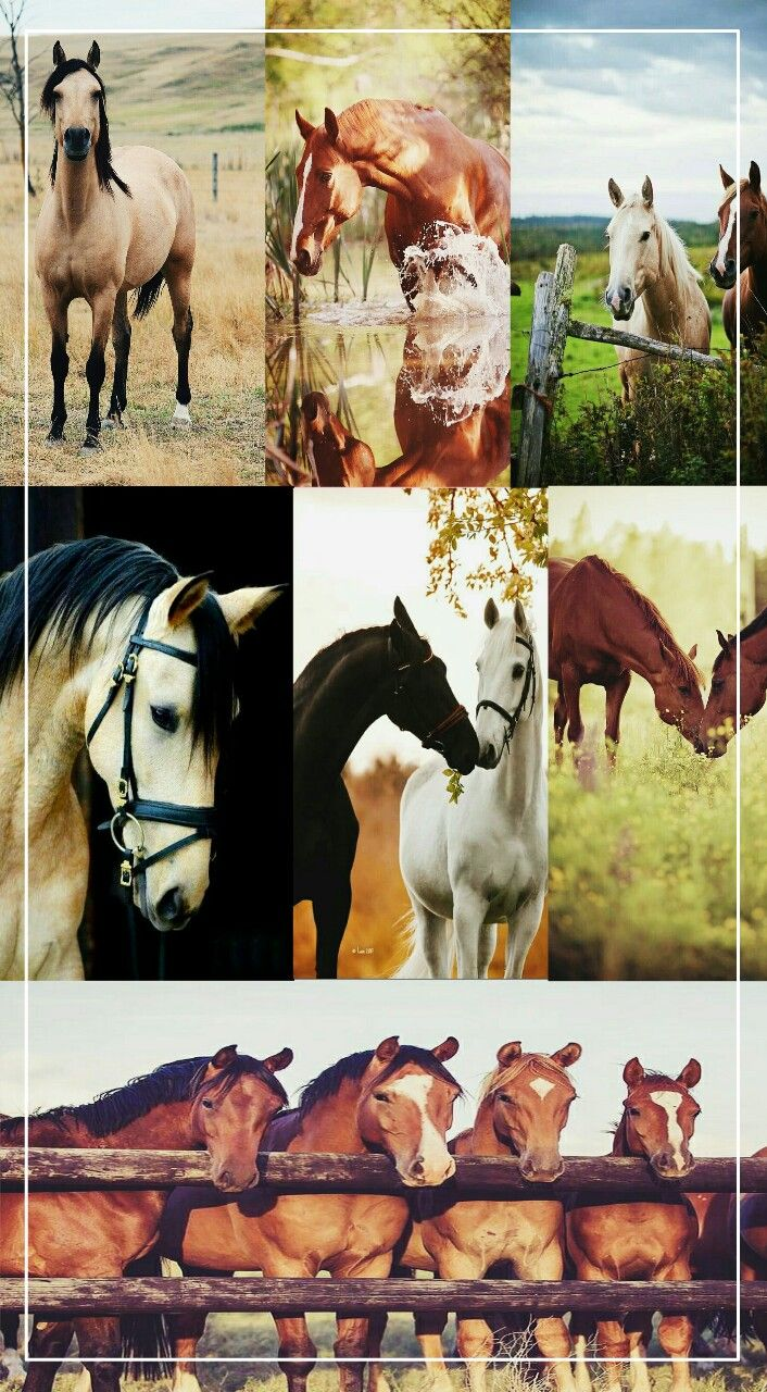 Download Wallpaper Horse Collage - f9b63c866eb49cdddaab33aaf9b4515e  Snapshot_1002419.jpg