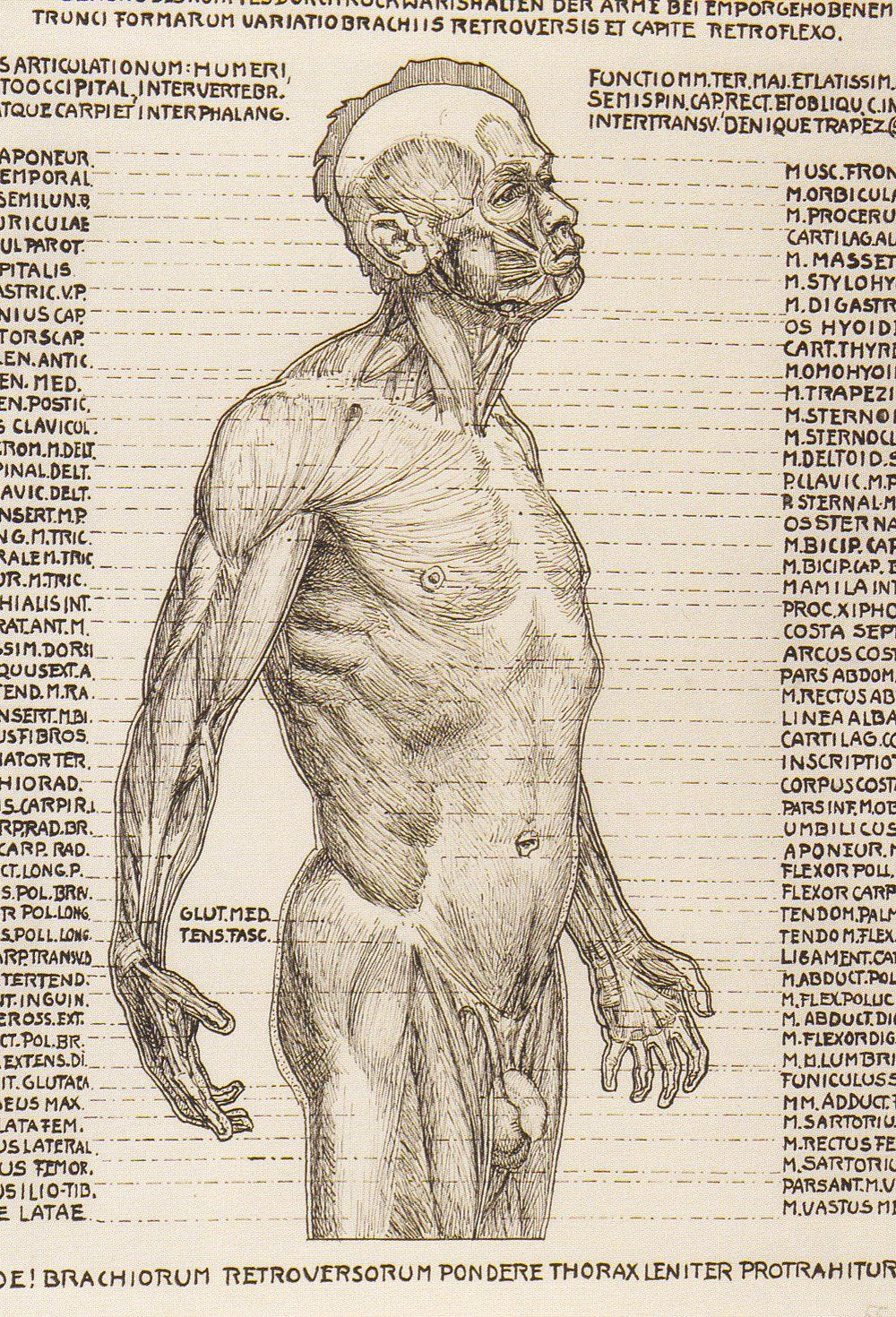 by Herman Heller book containing these and tons of other anatomic ...