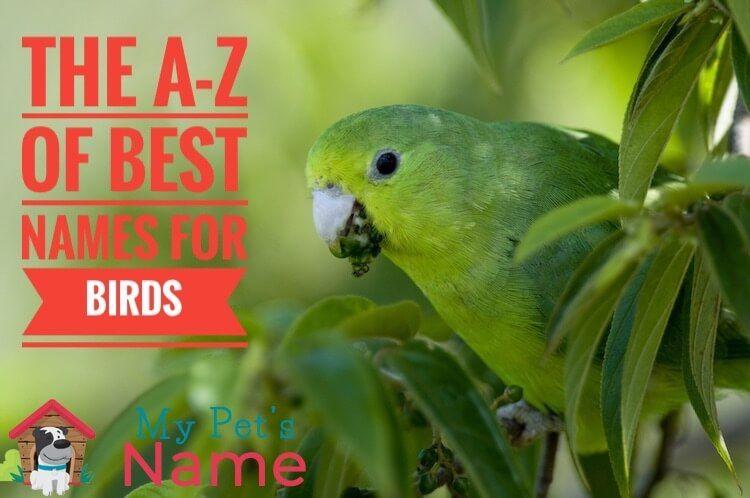 450 Bird Names The A Z Of Best Names For Birds My Pet S Name Parakeet Names Cool Names Pet Names