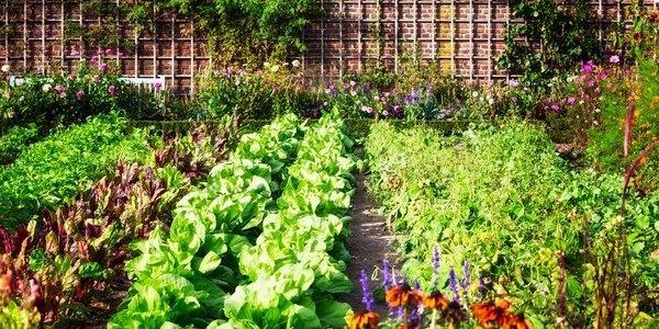 Mese di Giugno: semina, raccolto e lavori nell'orto ...
