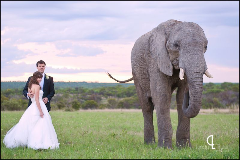 Large African Elephant and Bride and Groom {www.lindytruter.com}