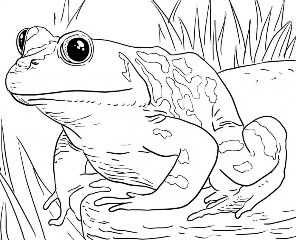 Heres Why You Should Attend Animals Colouring Coloring Frog