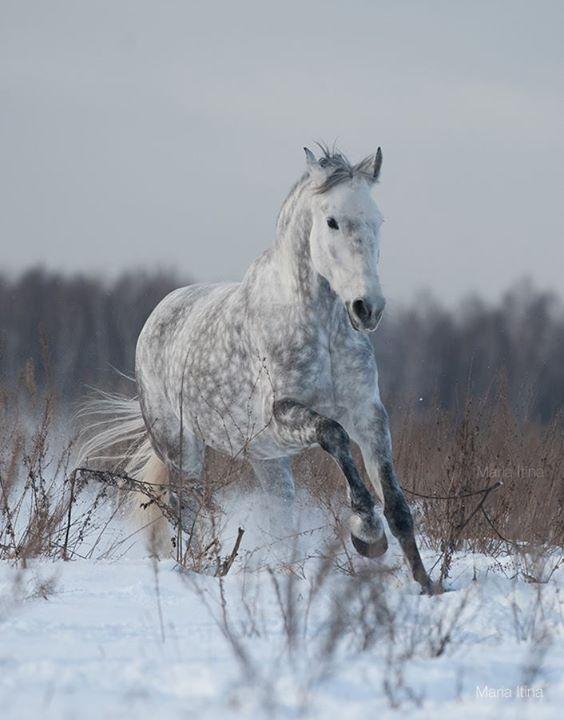 Horsealot Photographie - Maria Itina Horses Pinterest Equine - equine release form