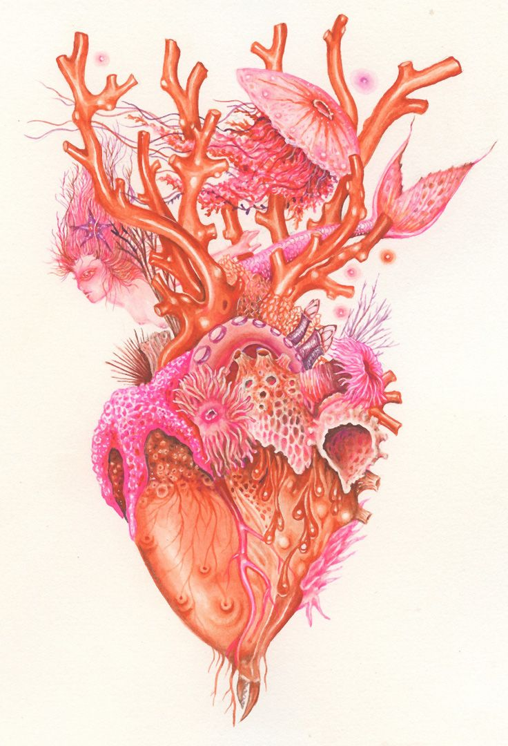 Anatomical heart illustration by Wendy Wallin Malinow, gouache ...