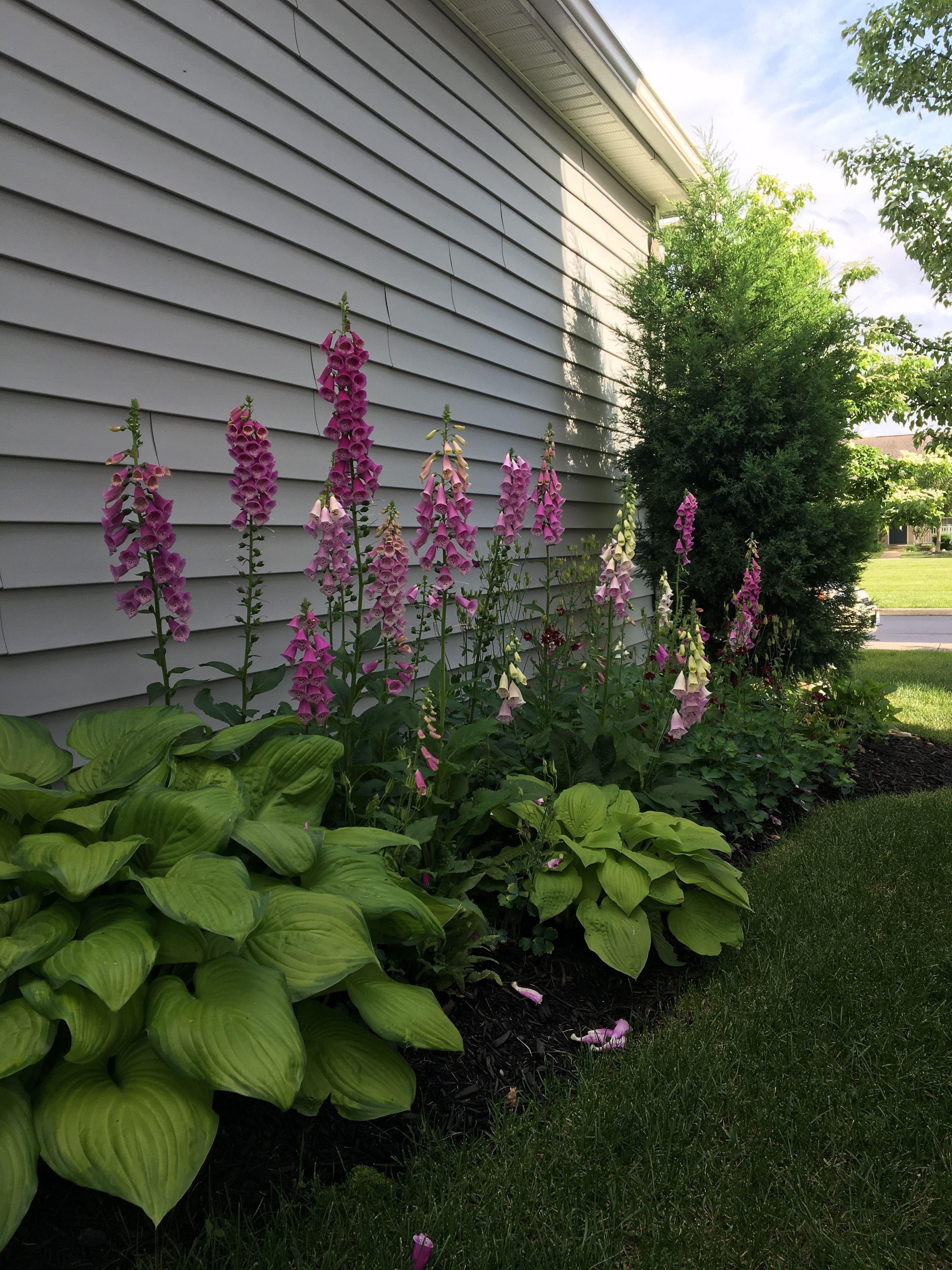 Foxglove Hosta Front House Landscaping Side Yard Landscaping Porch Landscaping