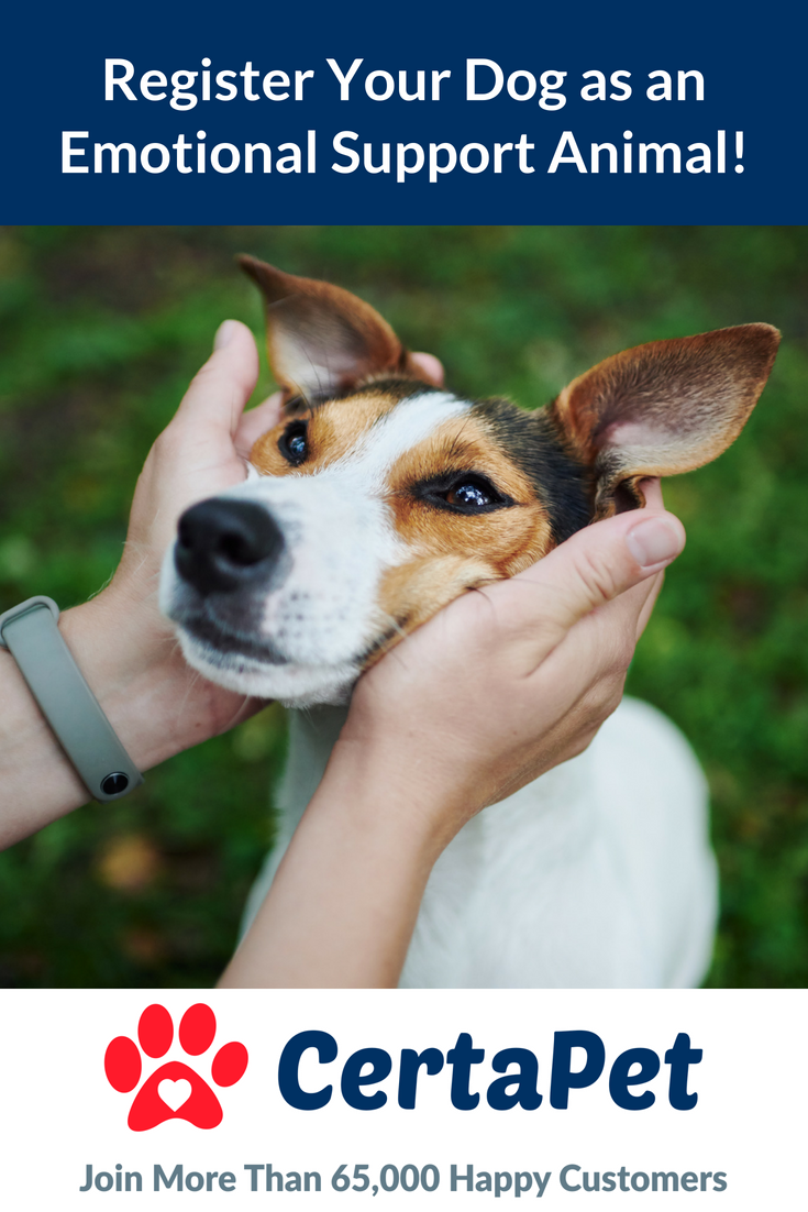 Let Us Help You Register Your Dog as an Emotional Support ...