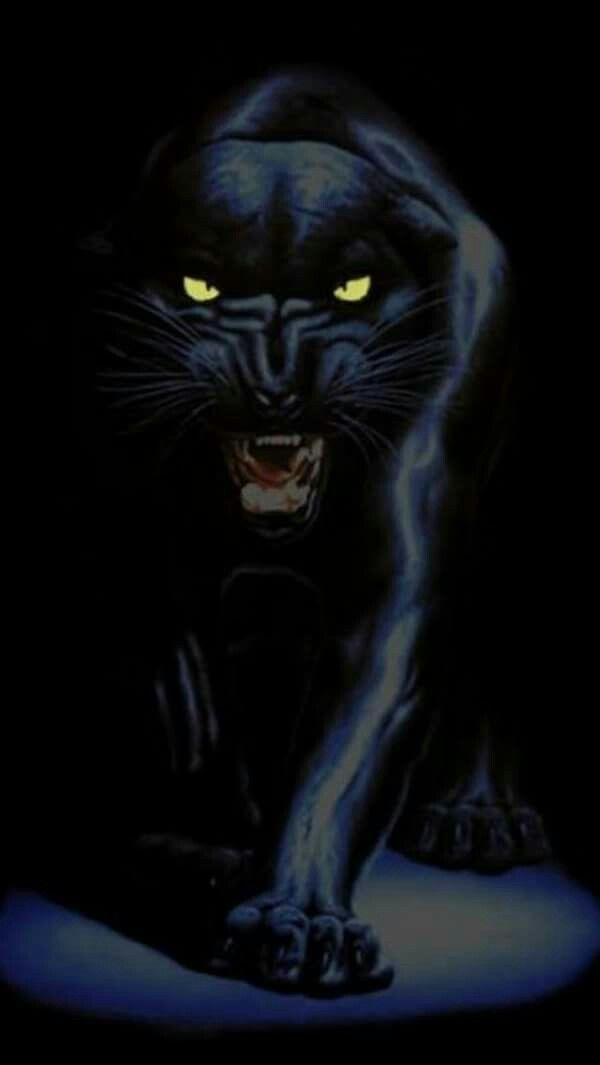 Pin By Tammy Underwood On Animals Jaguar Wallpaper Panther Animal Wallpaper
