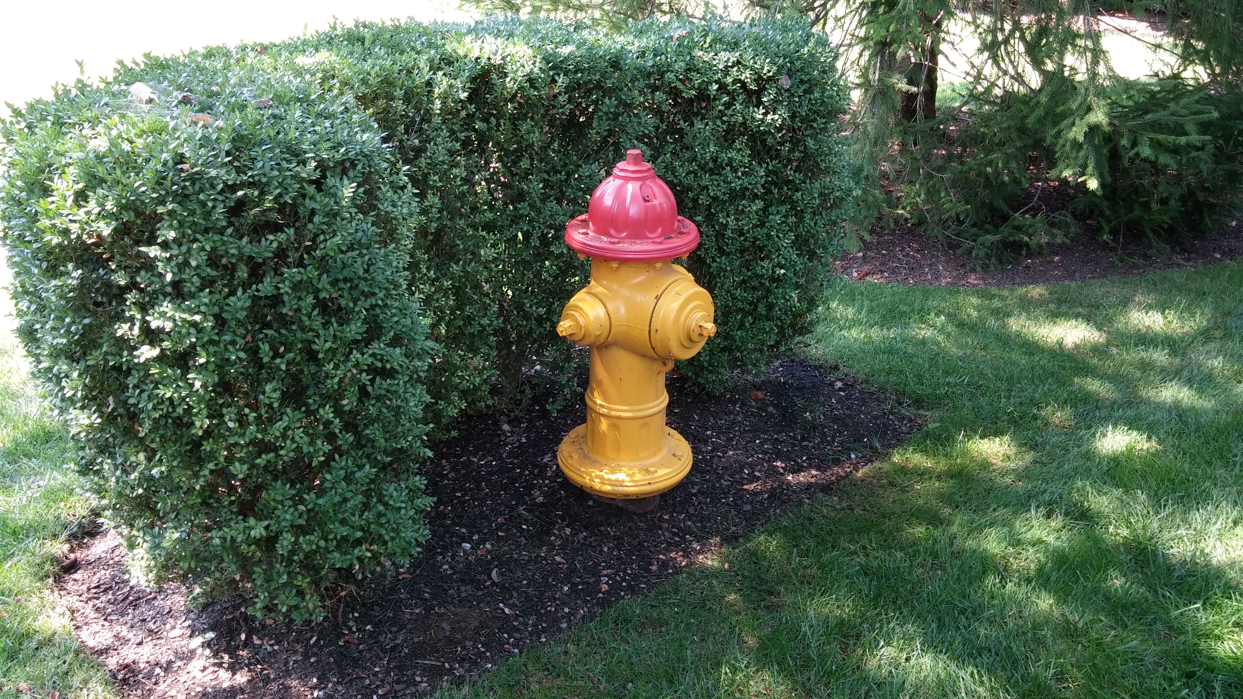 A Small Planting Of Boxwoods Goes A Long Way To Hiding This Fire Hydrant From View Wit Privacy Landscaping Front Yard Landscaping Design Front Yard Landscaping