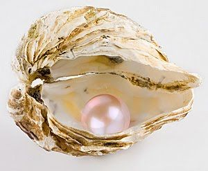 FrenchBlue | Pink pearl, Sea shells, Pearls