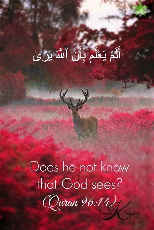 200+ Beautiful Quran Quotes, Verses & Surah (with English ...
