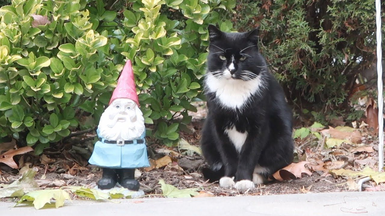How to Socialize a Feral Kitten Feral kittens, Feral cat