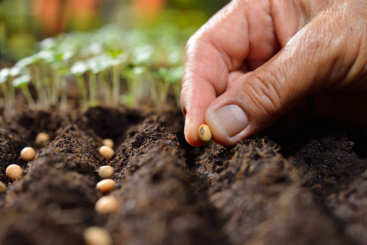 How To Sow Seeds Thinly Learn About Sowing Thinly In The Garden