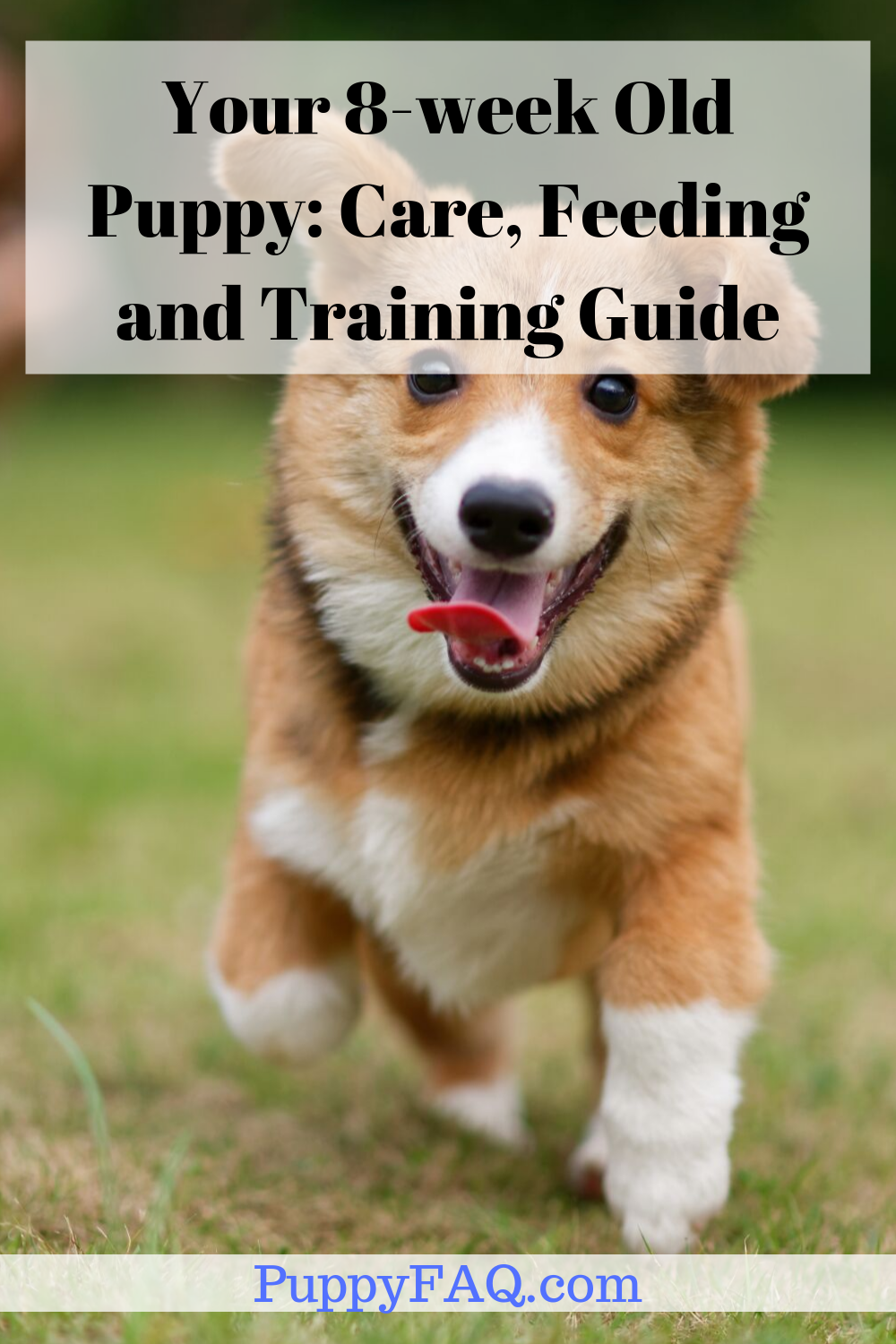 Your 8 Week Old Puppy Care Feeding And Training Guide Sleeping
