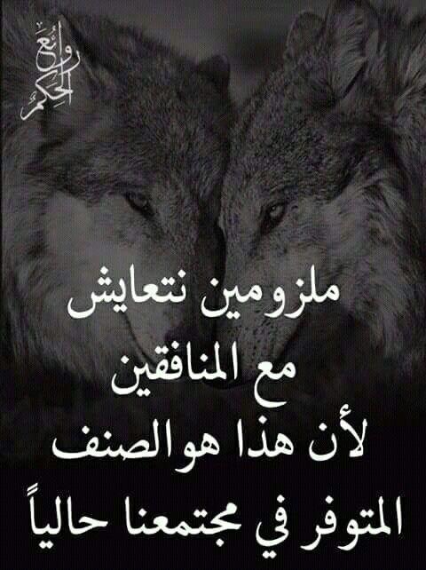 Pin By Sh Murad On Arabic Qoutesإقتباسات Funny Arabic Quotes Beautiful Arabic Words Words Quotes