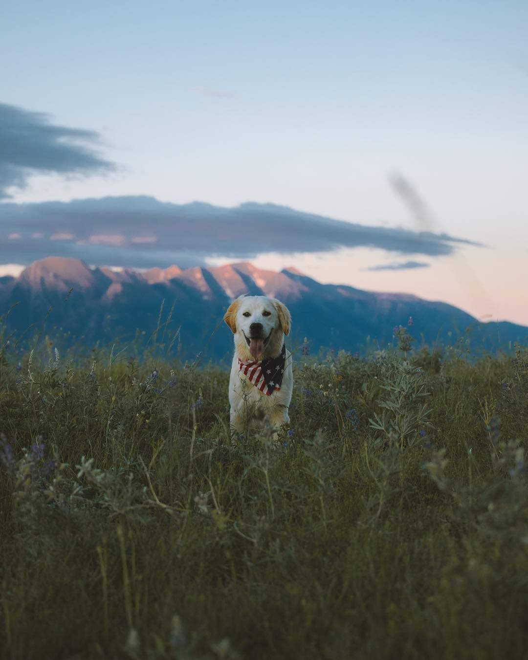 Milo In His Element Exploring The Mission Mountains In Montana