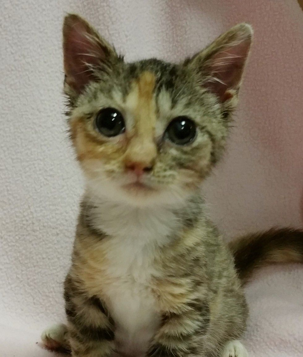 A tiny kitten weighed just about half of a muffin when she came to