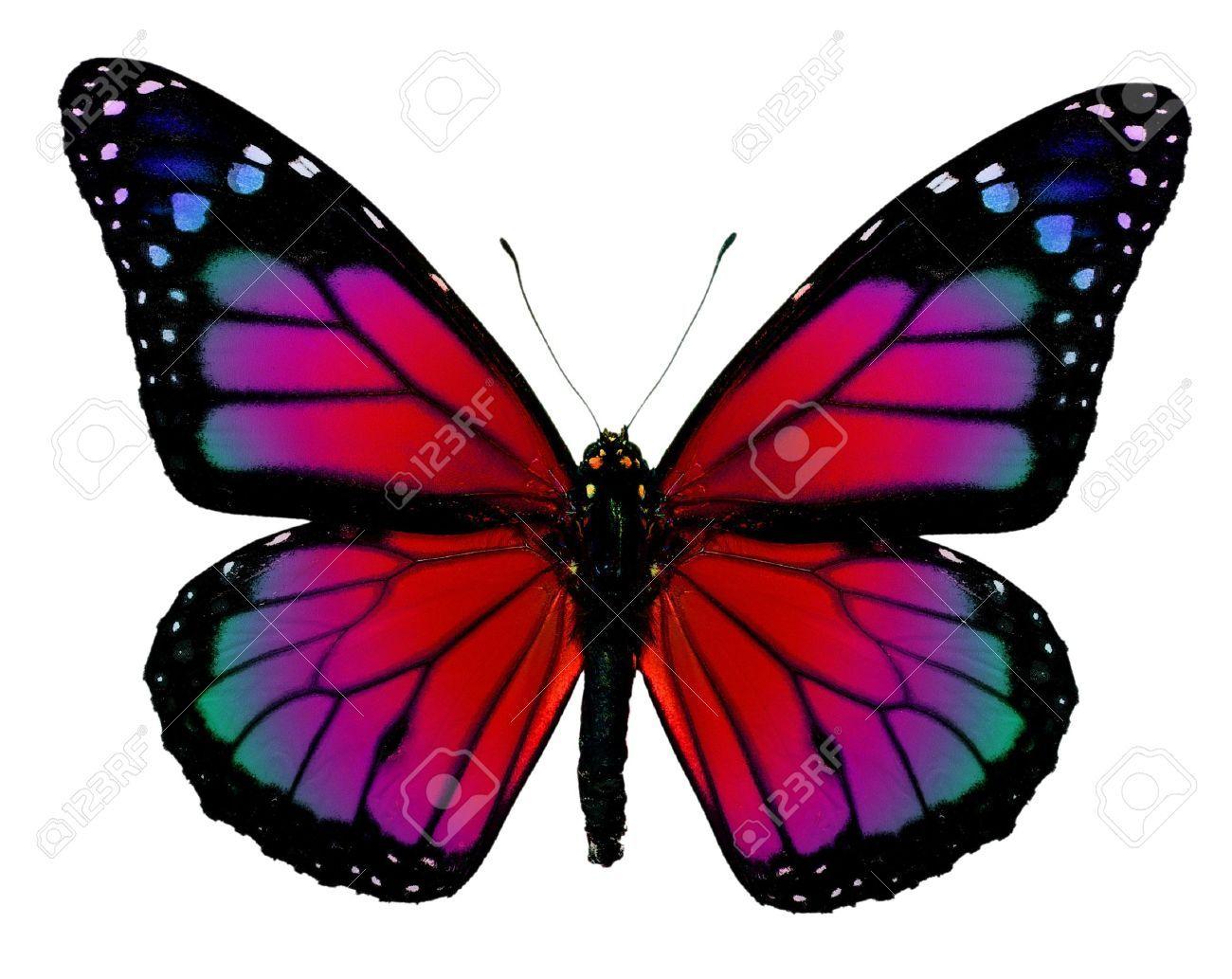 Dibujos De Mariposas Infantiles A Color: Mariposas Monarcas Moradas - Buscar Con Google