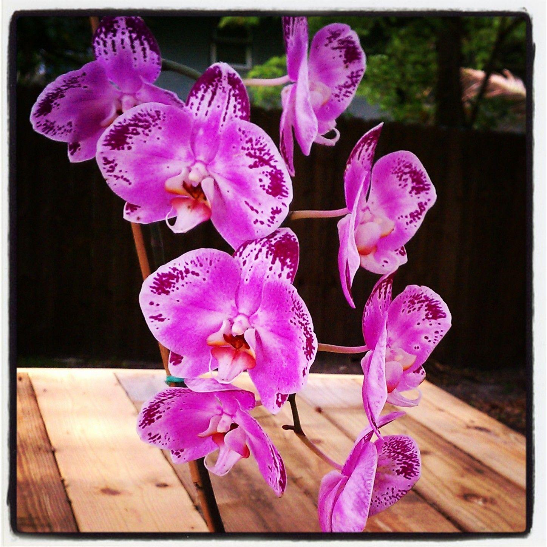 Gorgeous purple flowers #bromeliad #orchids