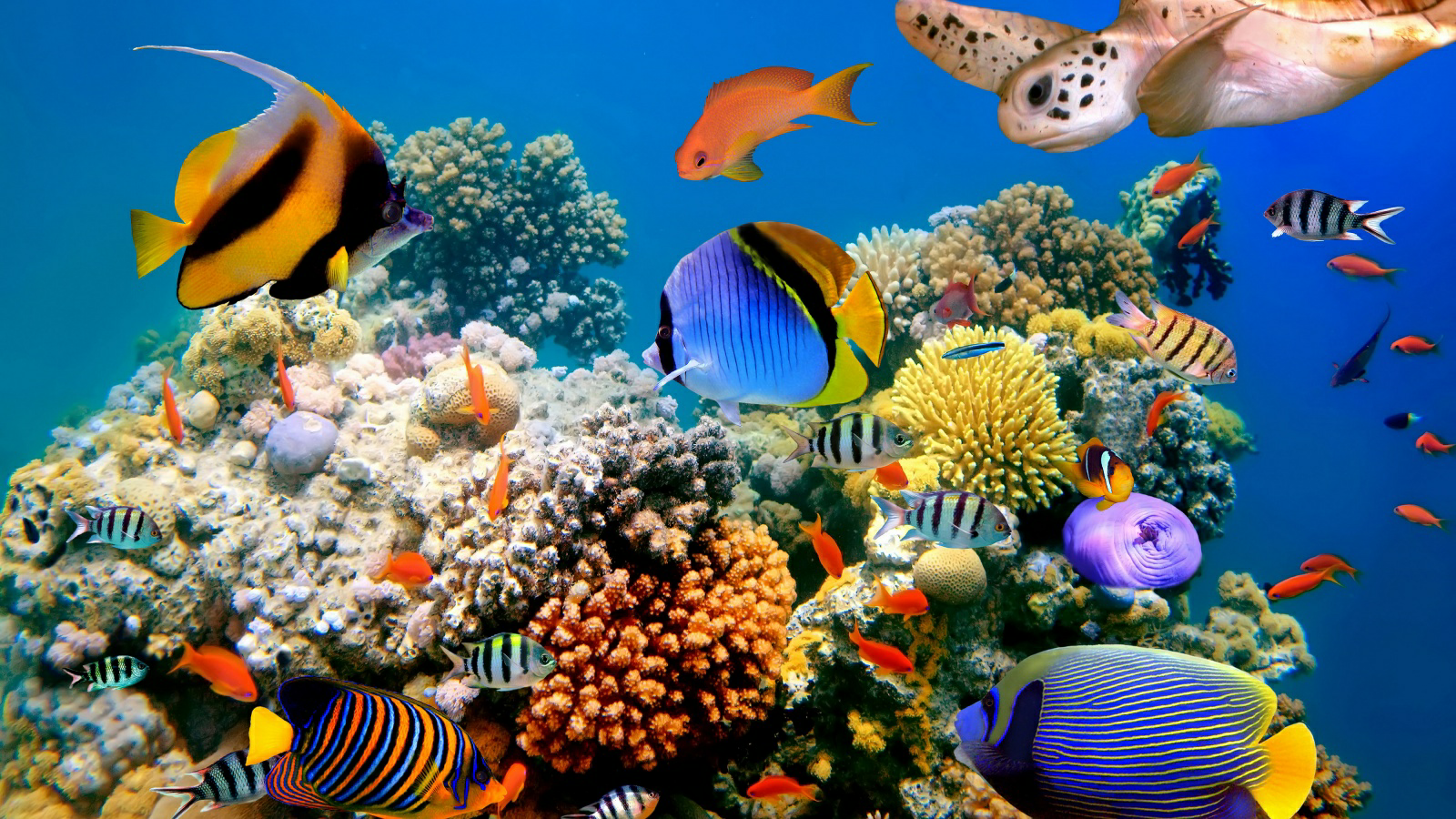 Under The Sea Wallpapercase Free Hd Wallpapers Underwater Wallpaper Underwater Fish Tropical Fish