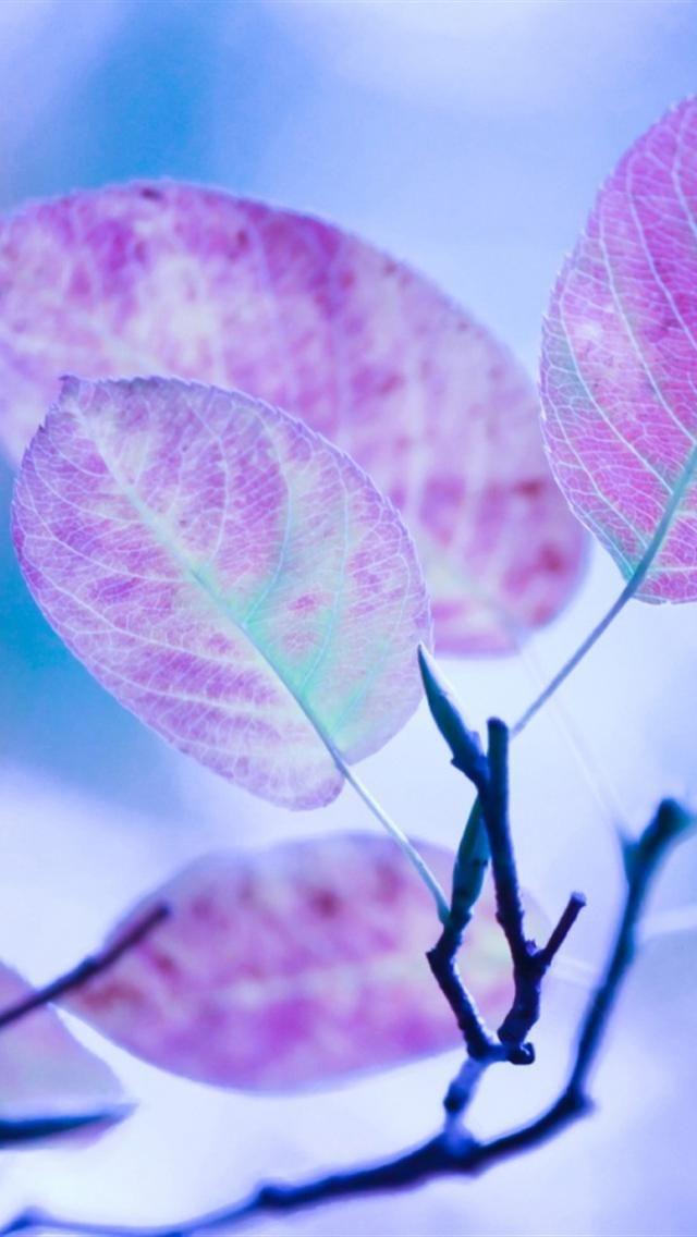 iphone 5 wallpapers hd cute purple leaves iphone 5