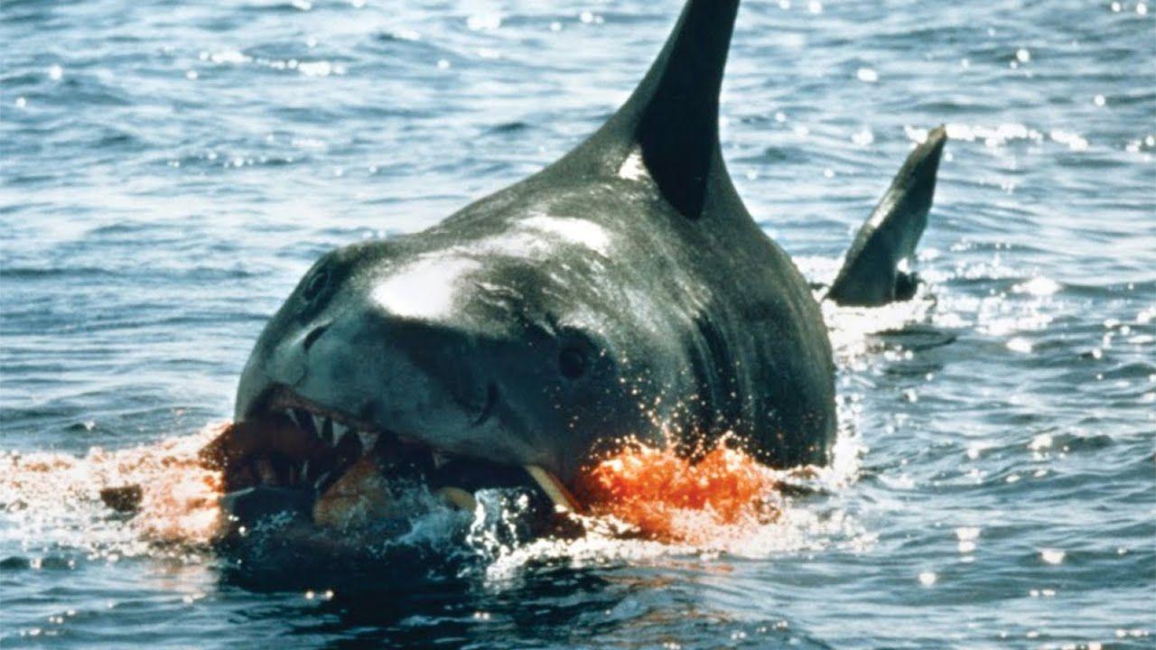 Wow, super scary! 10 Worst Shark Attacks Shark attack