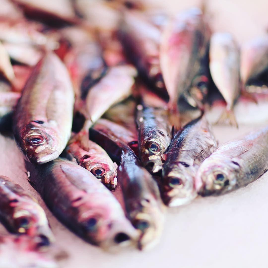 Morning catch #marketfood #JAN #niceport #verilymoment #onmytable #foodie #foodporn #foodstagram by janhendrik2016