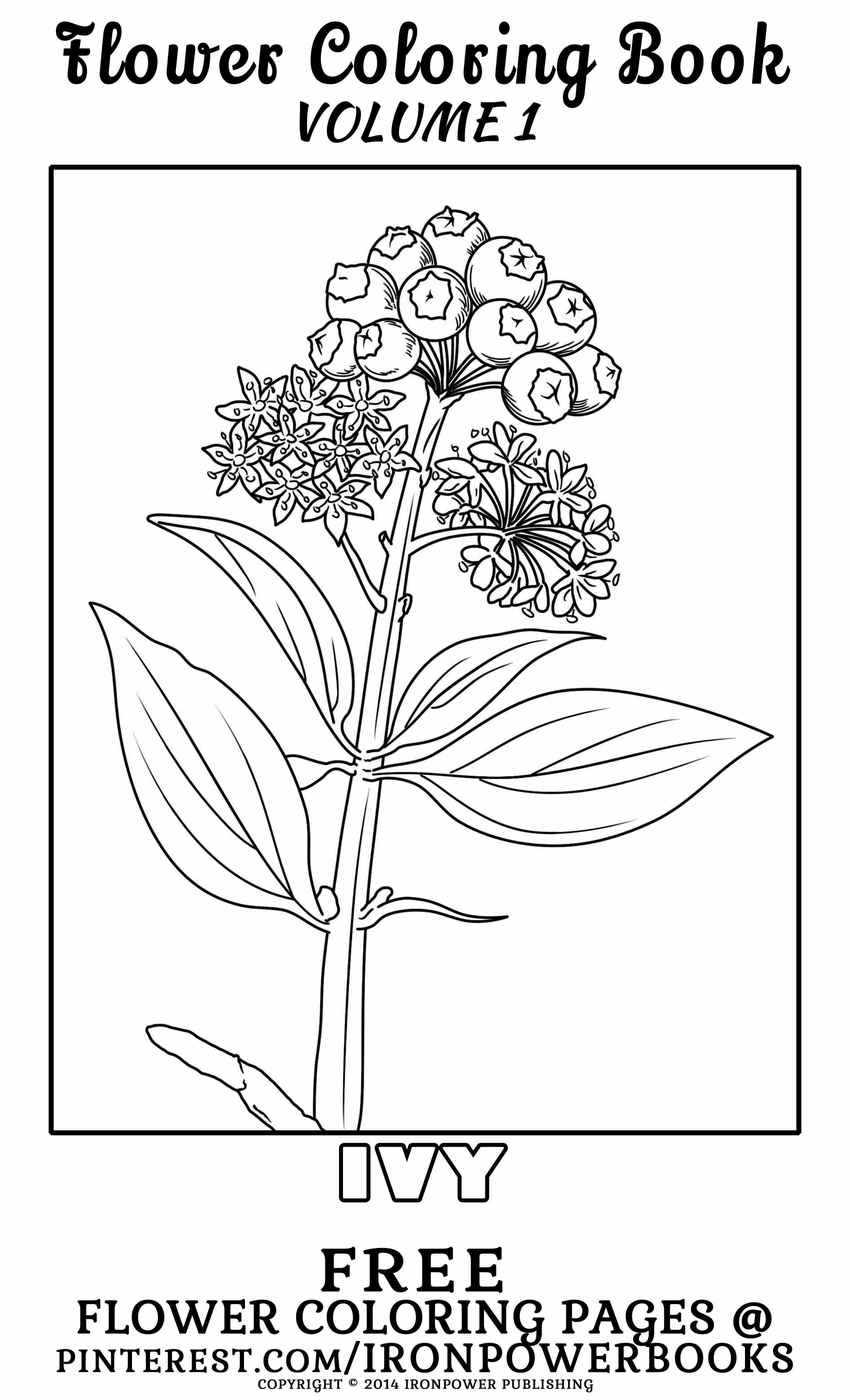 Free Flower Coloring Page From Ironpower Publishing Please Use Freely For Personal Non Commercial Fairy Coloring Pages Flower Coloring Pages Coloring Books