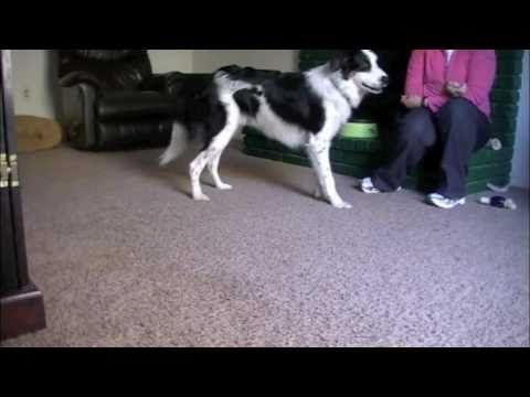 Moonwalk And Backward Limp Capturing Behaviors And Putting Them