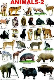 Wild Animals Name List With Picture – images free download