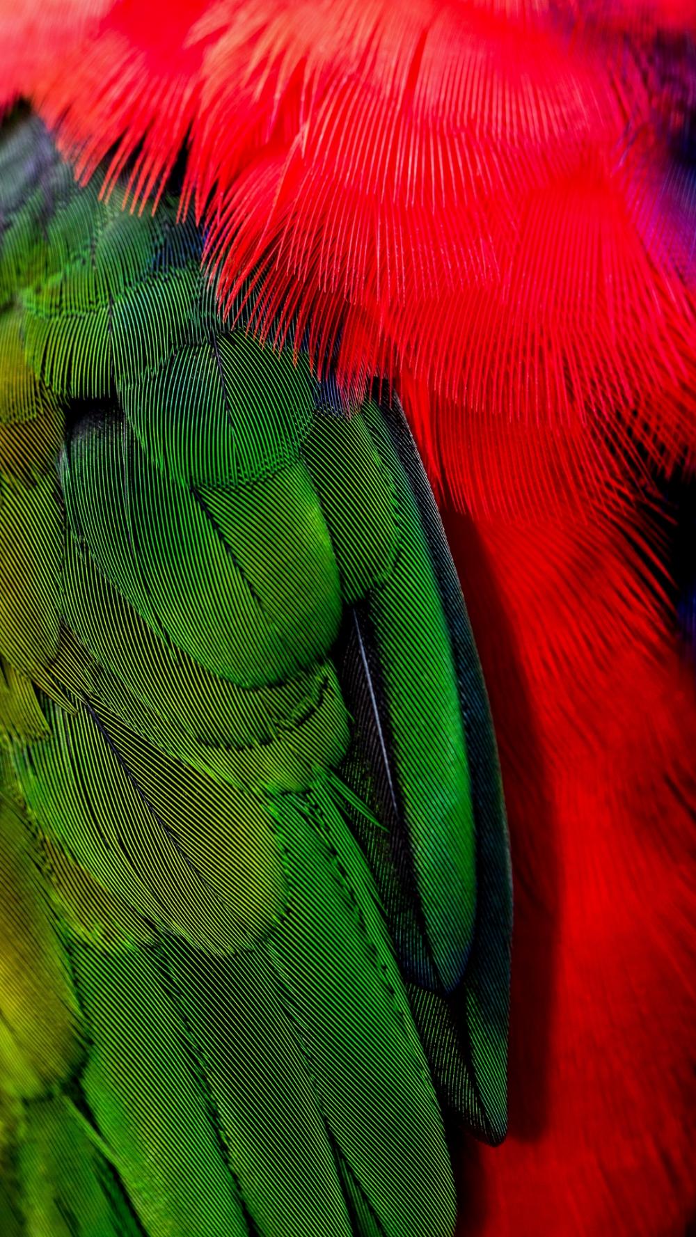 Telecharger Le Papier Peint 1080x1920 Plumes Vert Rouge Oiseau Samsung Galaxy S4 S5 Note Sony En 2020 Samsung Galaxy S4 Papier Peint Galaxy
