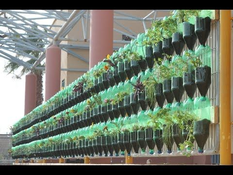 How To Make A Living Wall the green wall - educational vertical garden bottle system project