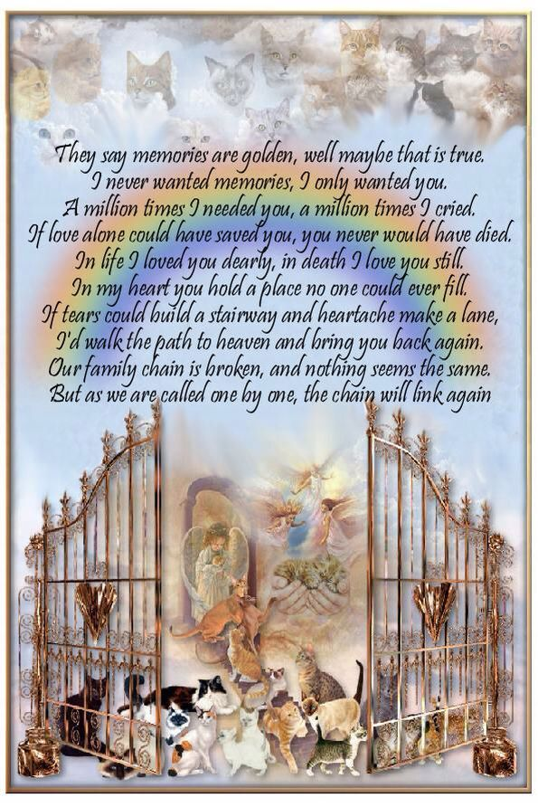 All Pets Go To Heaven Pet Poems Dog Poems Rainbow Bridge