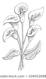 Callas Flower Graphic Black White Isolated Bouquet Sketch Illustration Vector Flower Art Drawing Beautiful Flower Drawings Flower Drawing