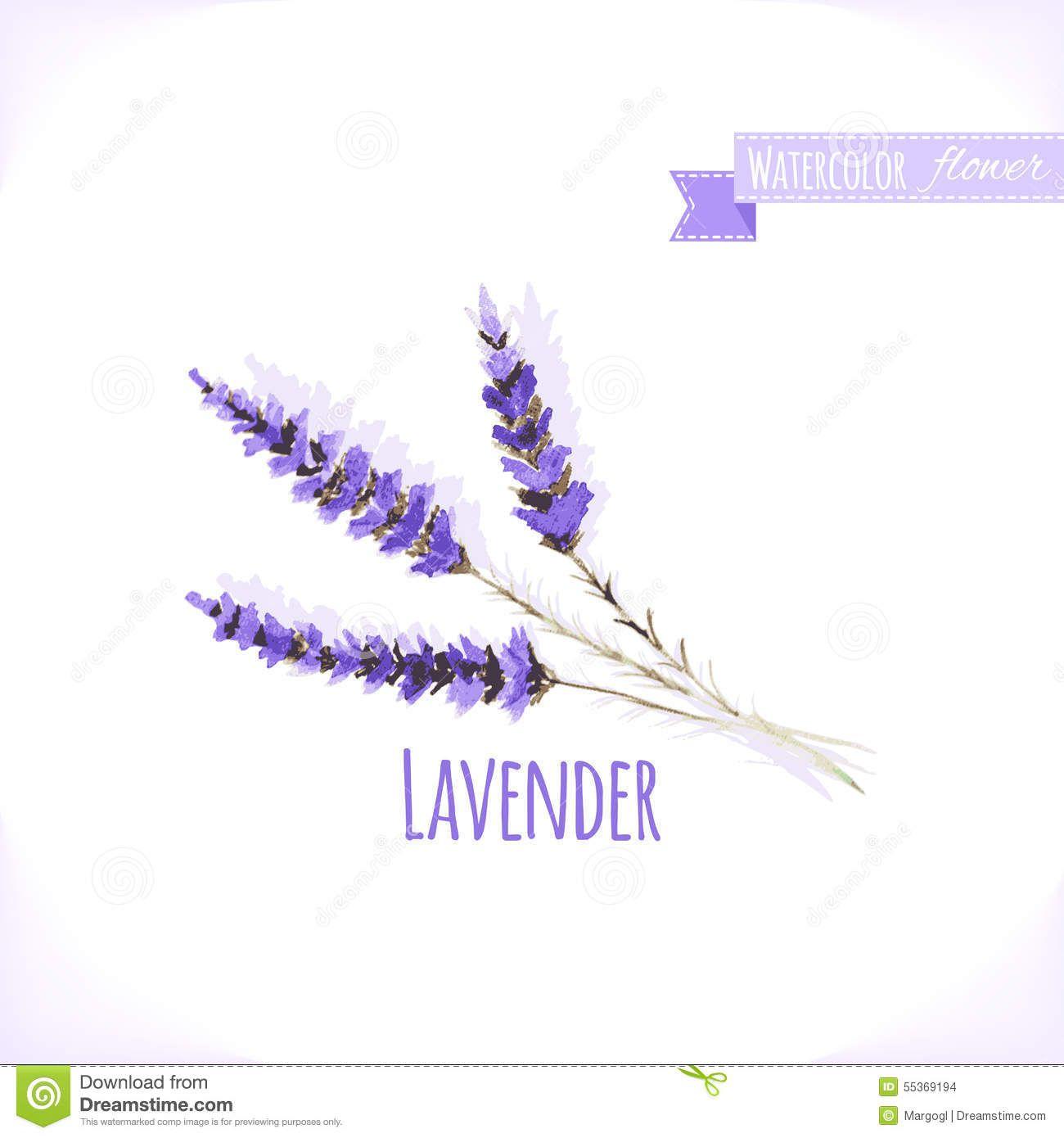 Vector Watercolor Lavender Malen