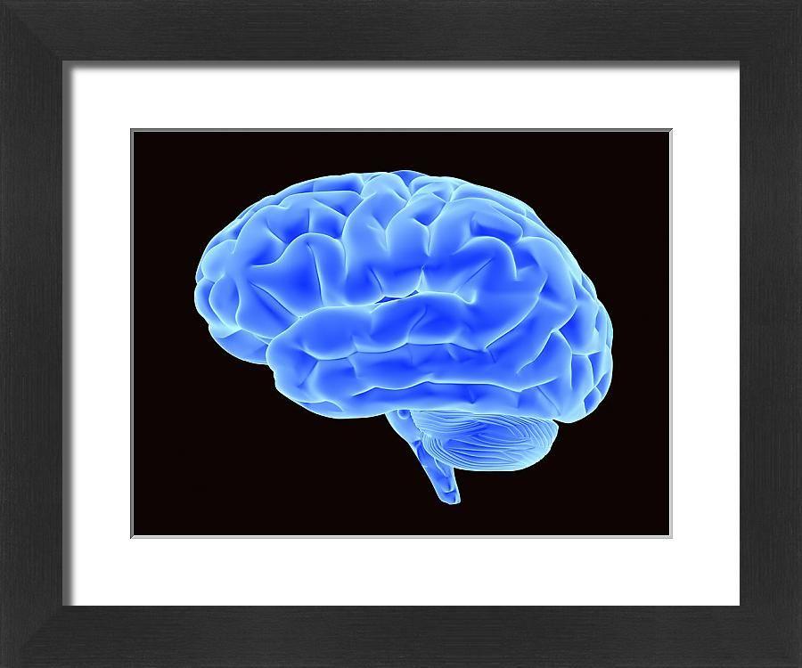 25+ Large Framed Photo. Bright blue brain, 3D illustration
