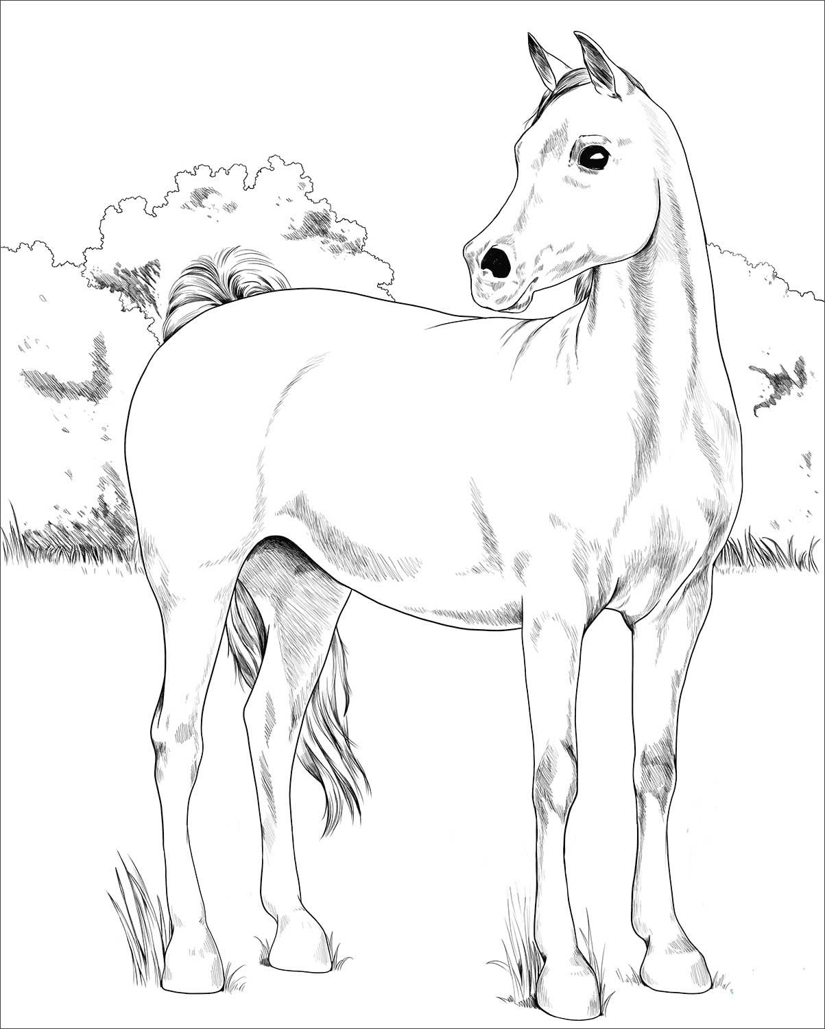 Arabian Horse Coloring Page Horse Coloring Books Horse Coloring Horse Coloring Pages