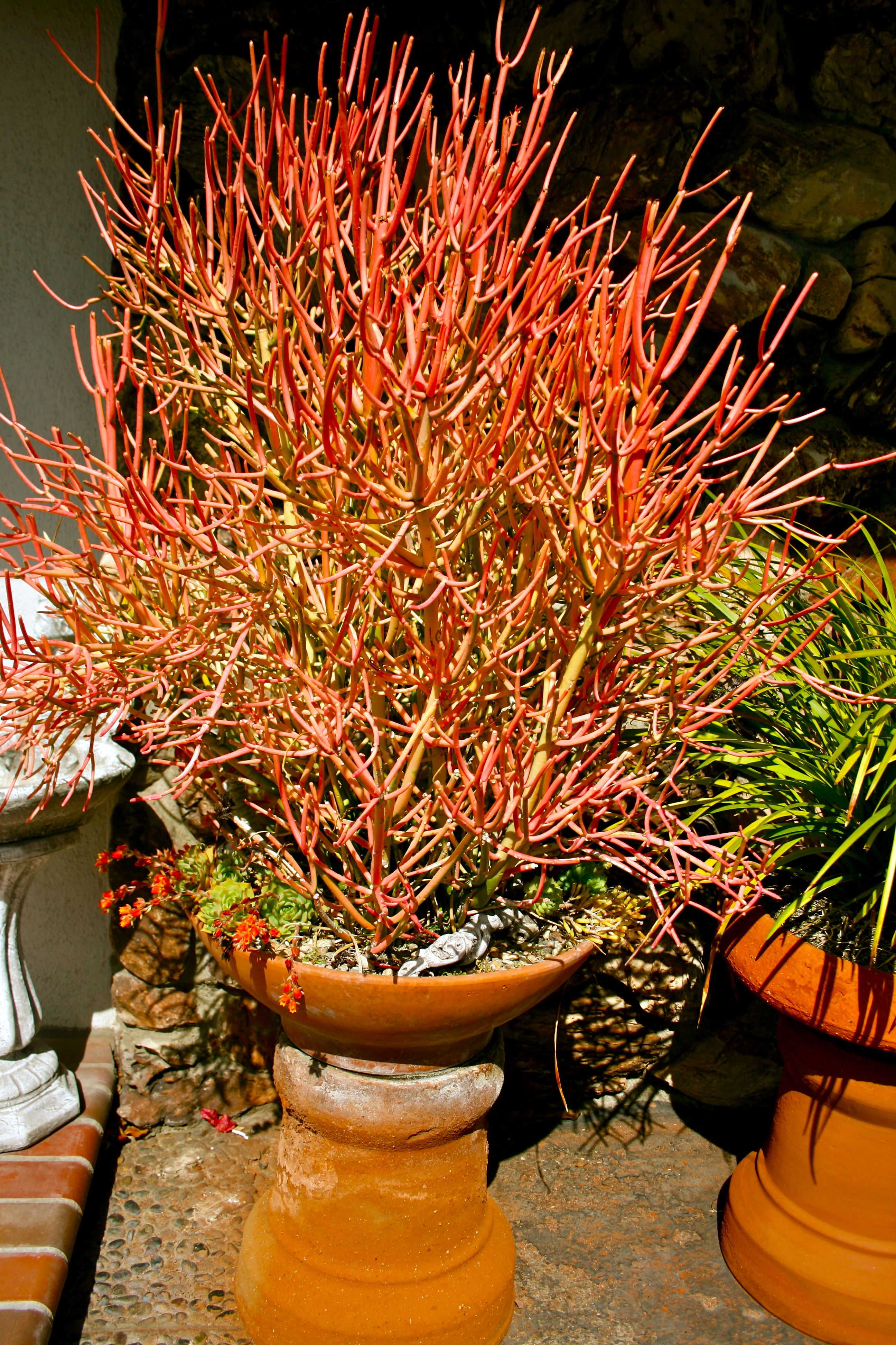 Cactus in california plants garden cactus