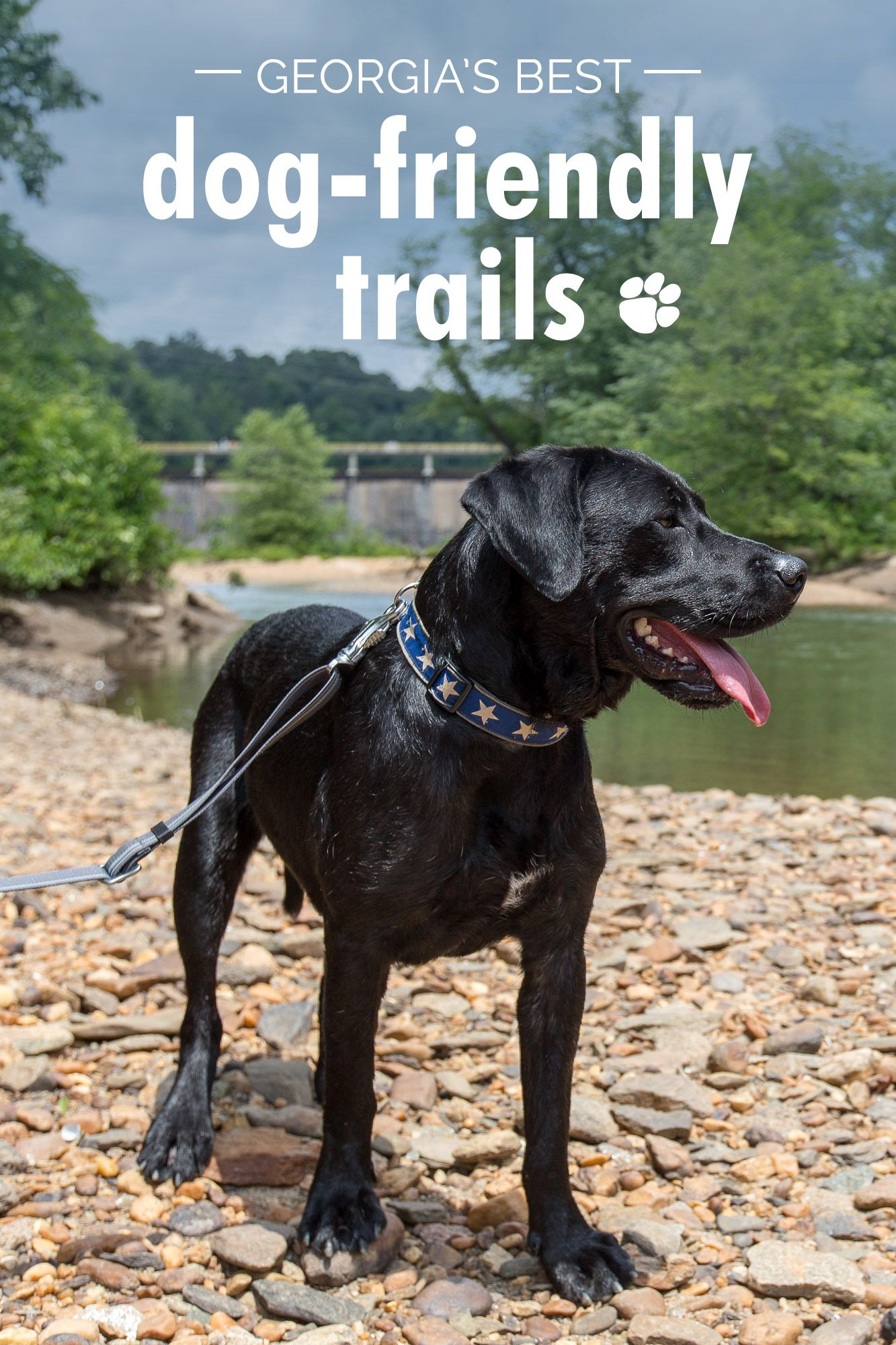 Georgia's Best Dog Friendly Trails: Our Favorite Dog Hikes
