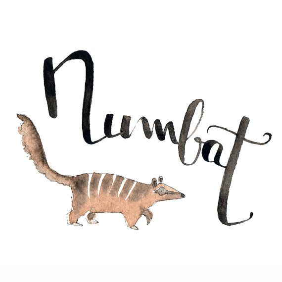 N Like Numbat Learn English With Fun What Animal Name Starts With N Print Of My Original Watercolor Alphabet Nursery Decoration Alphabet Maternelle