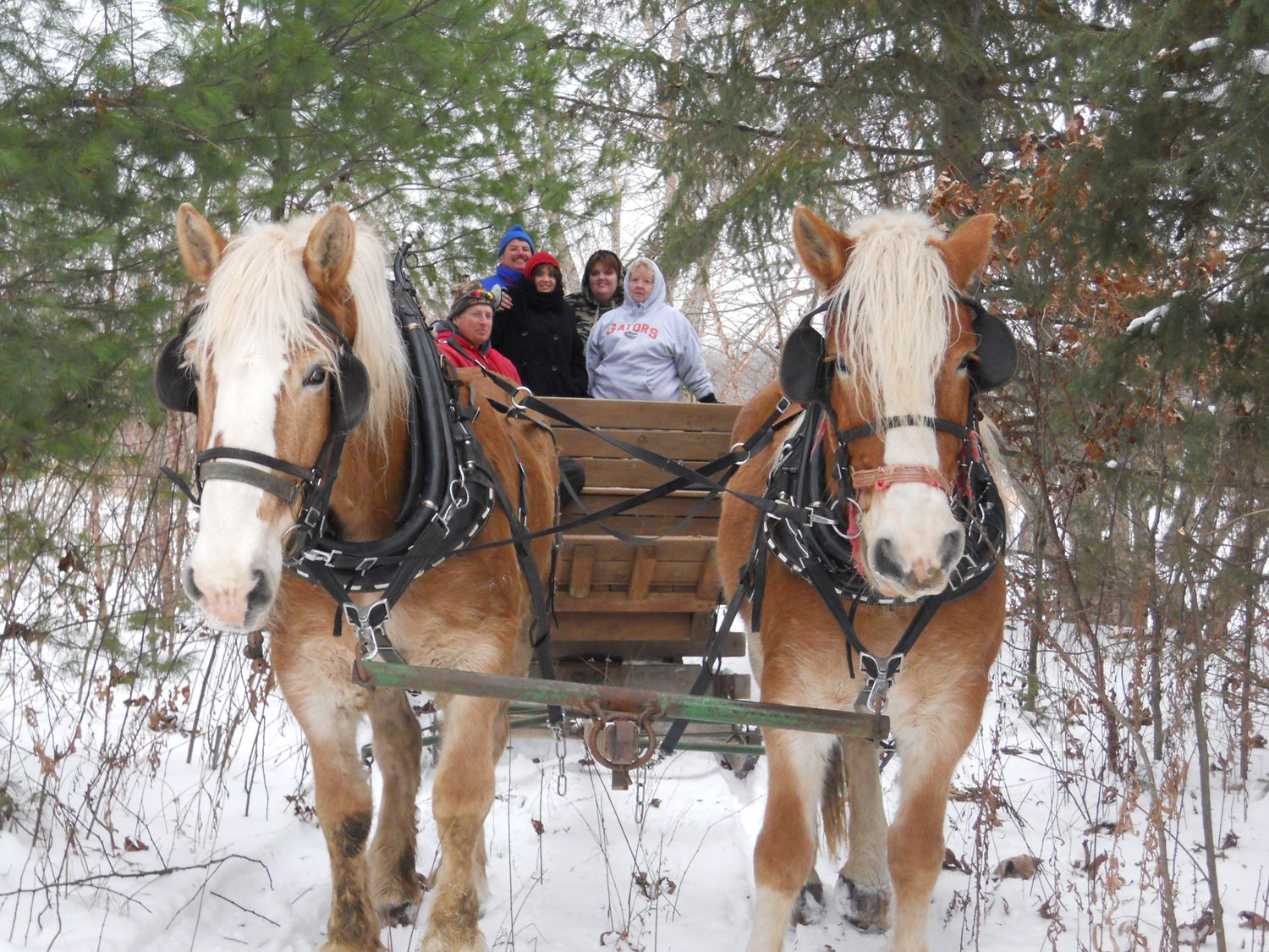 Sleigh Rides At Christmas Mountain Village Great Winter Family Place In Wisconsin Dells Nearby Our Lak Wisconsin Dells Winter Wisconsin Dells Wisconsin Travel