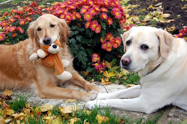 232 Dog Best Friends That Can T Be Separated Dog Best Friend