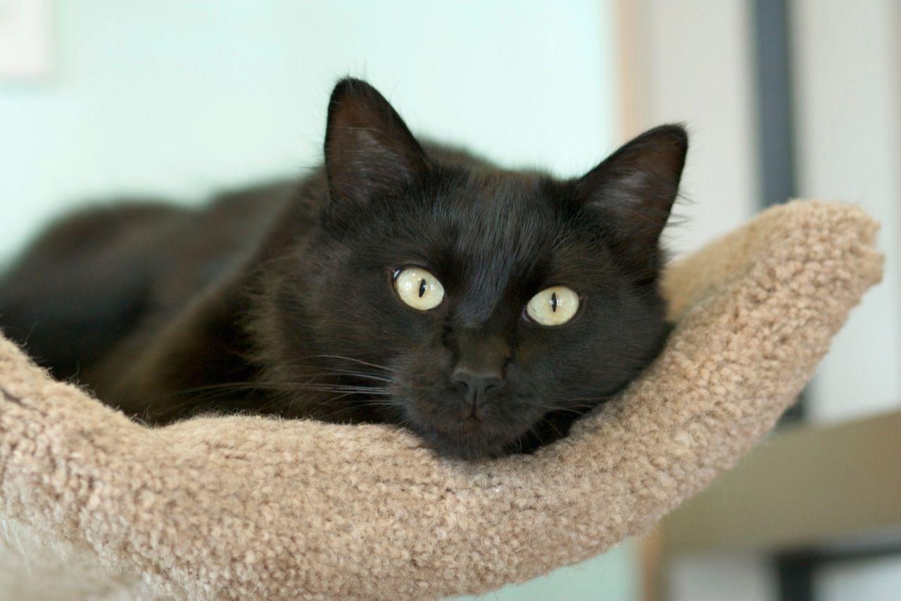 Lauren Cats, Pets, Adoption