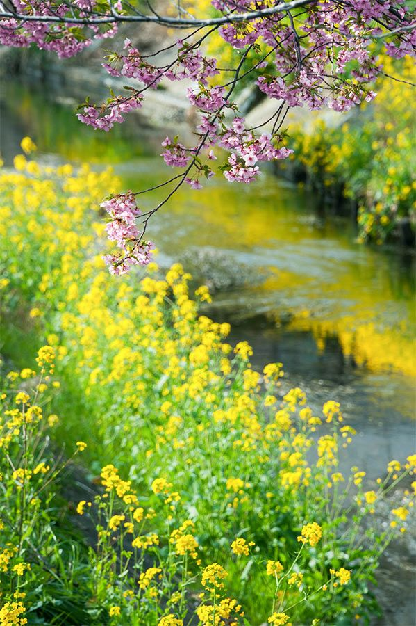A Few Of My Favorite Things English Countryside Nature Beautiful Nature Landscape