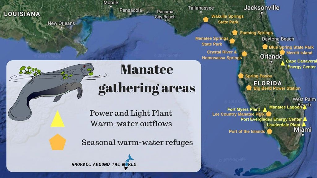 Facts about Manatees in Florida | Snorkel Around The World | Florida camping, Manatee florida, Manatee