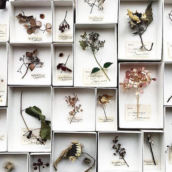 Um die getrockneten Blumen Marimerveille