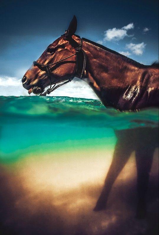 www.pegasebuzz.com | Equestrian photography : C.J. DeWolf : Horses in Hawaï.
